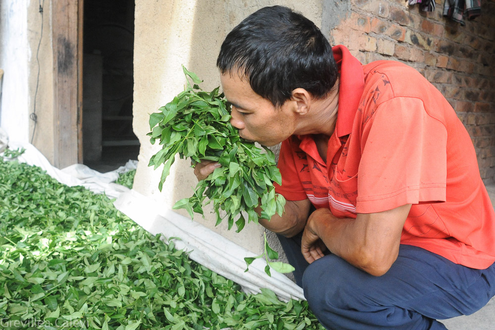 Most nanjing tulou residents grow or are involved with tea.
