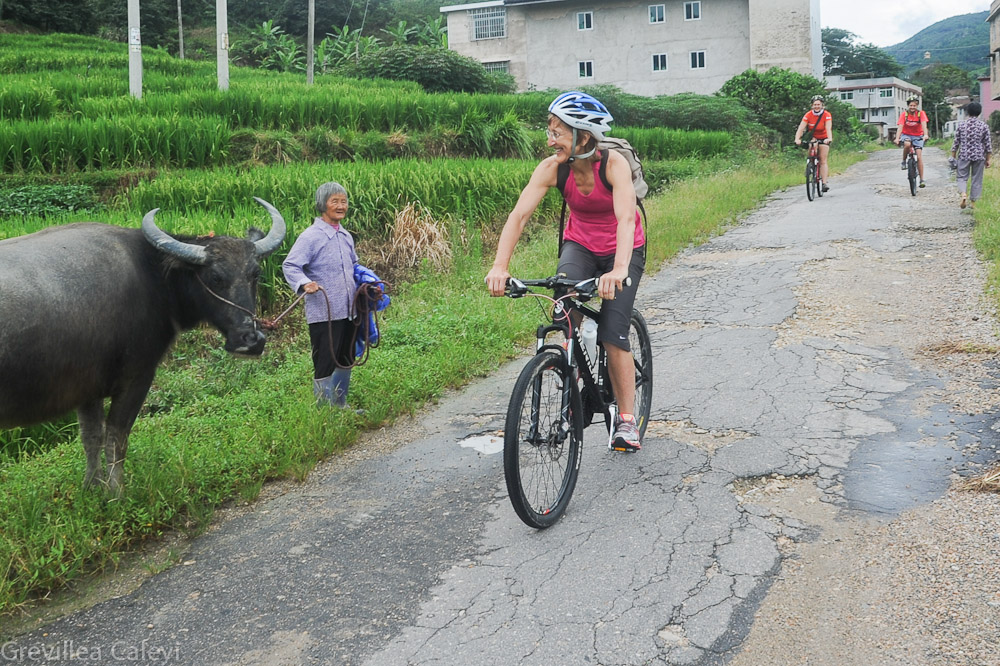 Rice farms along the Yanxi valley country roads.